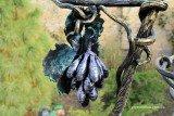 Кованая подставка для цветов «Виноград» - гроздь
