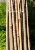 Бамбуковые палки, палочки, стволы