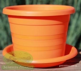 оршок для фиалки Краковский оранжевый