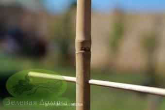 бамбуковая лесенка для вьющихся растений