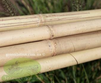 Бамбуковые палки